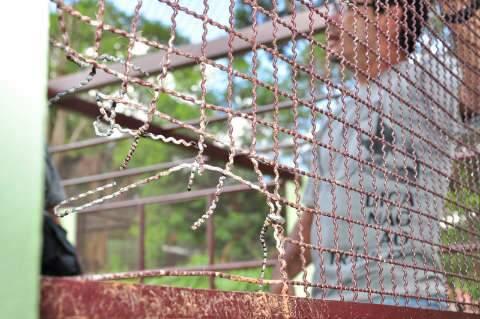 Sindicância vai apurar falha na soldagem de jaula de onça fugitiva