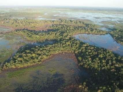 Justiça barra desmatamento de 20 mil hectares no Pantanal de Corumbá