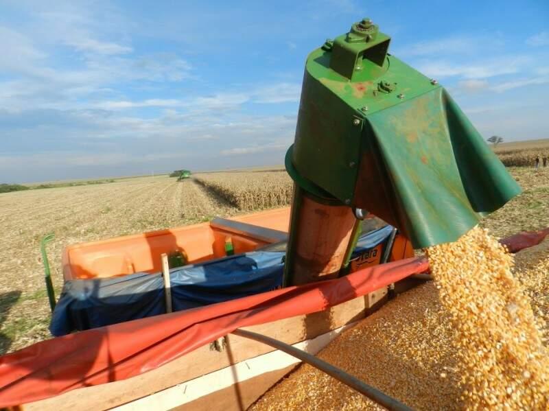 Saca de 60 quilos do milho custa em média R$ 31,94. (Foto: Famasul/ Divulgação)