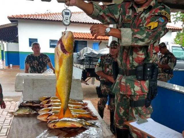 Peixes apreendidos pela PMA durante um flagrante (Foto: PMA/Arquivo)