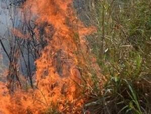 Primeiros dias do ano registram  58 focos de incêndio no Pantanal