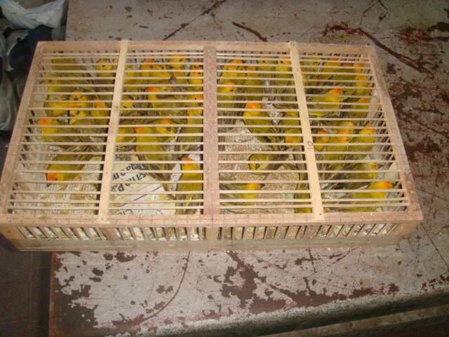 Aves estavam em 25 gaiolas como essa.
