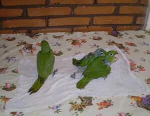 Os animais foram encaminhados ao Cras em Campo Grande. (Foto: Divulgação)