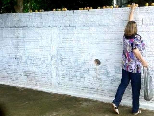 Cleonice cata as mangas sob o muro da amiga.
