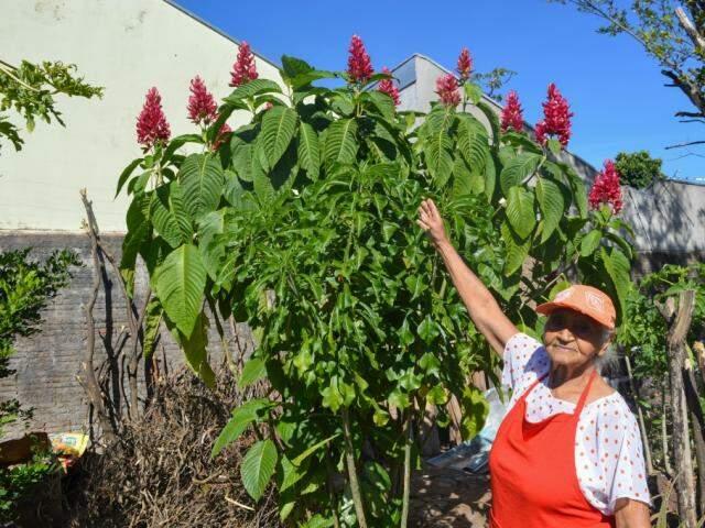 Olímpia cuida das plantas do jardim (Foto: Simão Nogueira)