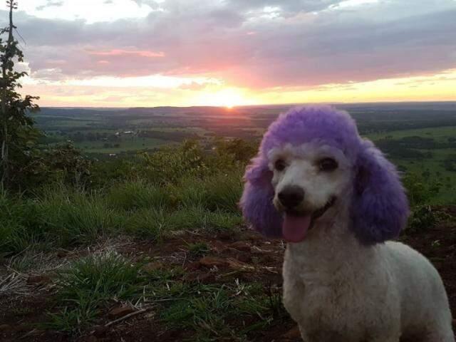 Curtinho o pôr do sol no Morro Ernesto (Foto: Arquivo pessoal)