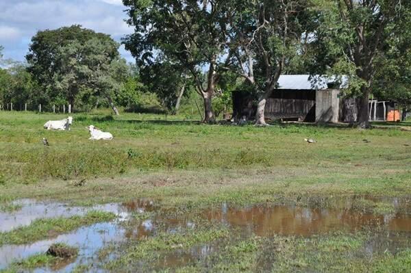 Área foi desmatada para criação de gado. (Fotos: MPF)