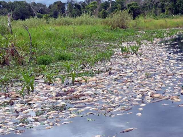 Decoada provocou morte de mil toneladas de peixe no Rio Negro em janeiro. (Foto: O Pantaneiro)
