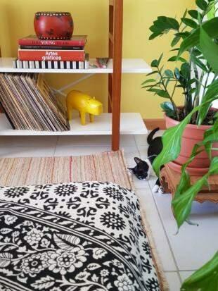 Parede colorida e plantinhas pela sala trazem clima de quintal. (Foto: Bruna Fernandes)