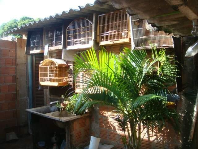 Aves, que estavam no Monte Castelo, foram levadas ao Cras. (Foto:Divulgação)