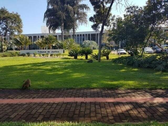 TJMS aguarda notificação oficial do CNJ para reunir Conselho Superior da Magistratura e deliberar sobre pagamento do auxílio-moradia. (Foto: Arquivo)