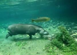 Imagem foi gravada por turista em rio de Bonito. (Foto: Reprodução vídeo)