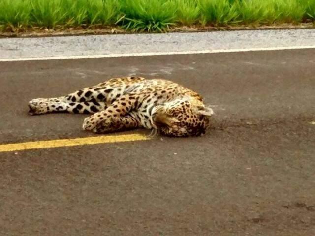 Registro feito por leitores que passavam pela rodovia durante a tarde de ontem (20). (Foto: Reprodução Facebook)