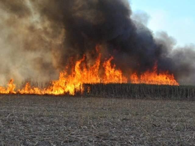 Canavial em chamas na fazenda Campo Bom, em Chapadão do Sul. (Foto: Jovem Sul News)