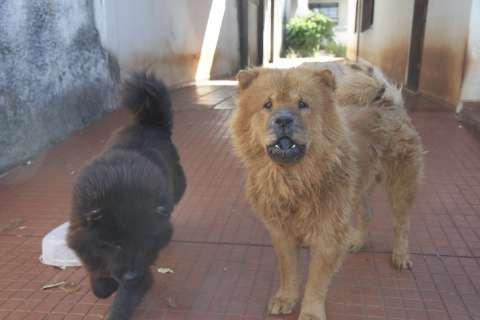 Moradores denunciam vizinho por abandono de animais no Monte Líbano