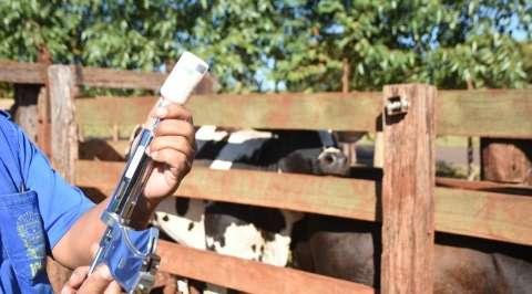 Prazo de vacinação contra aftosa na região do Planalto encerra hoje