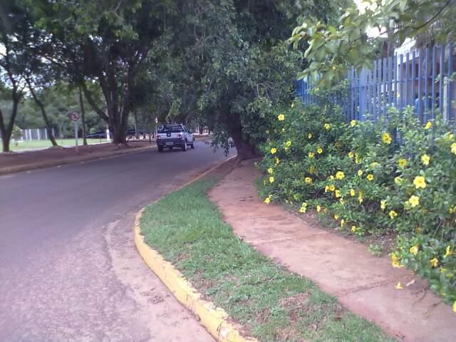 FIM DE LINHA - No meio do caminho, há uma árvore. (Foto: Ademir Rodrigues/Repórter News)