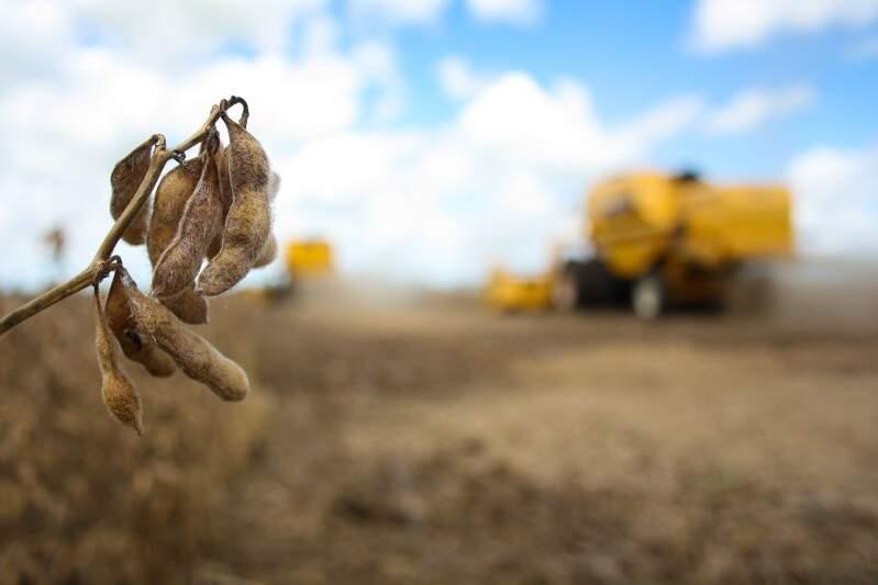 Produtores devem estar preparados para desvalorização do preço pago ao produtor, segundo Fernando Muraro (Foto: Marcos Ermínio)