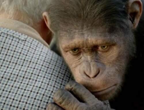 Filme abusou de recursos tecnológicos para reproduzir símios com emoção. (Foto: Divulgação)