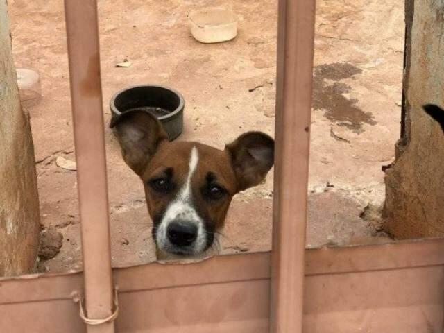 Cachorro em situação de abandono em casa de Campo Grande (Foto: Direto das Ruas)