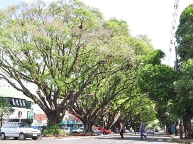 Árvores na avenida Mato Grosso foram tombadas em 2011. (Foto: Arquivo)