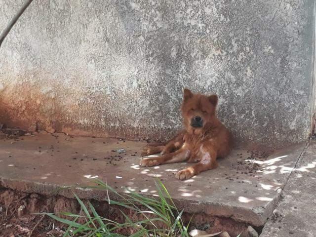 Cachorro estava com machucados espalhados pelo corpo. (Foto: Direto das Ruas)