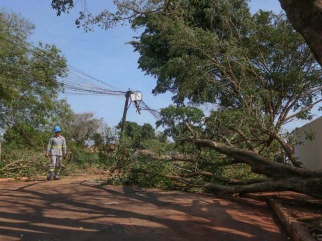 Na rua do posto do Jardim Botafogo, queda de árvore danificou poste (Foto: Marcos Maluf)