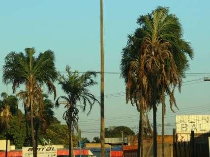 Após 20 dias sem chuva, garoa alivia tempo seco em Campo Grande