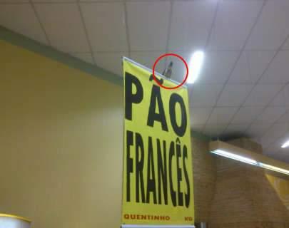 Leitor flagra pombo em padaria de supermercado na Capital