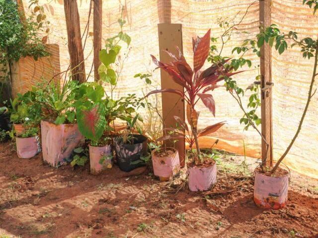 Mesa da varanda e todos os vasinhos de planta levam a cor rosa. (Foto: Paulo Francis)