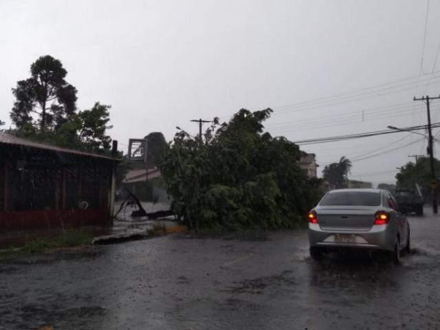... e, com ventos, árvore foi derrubada na Rua Uruguaiana. (Fotos: Mirian Machado)