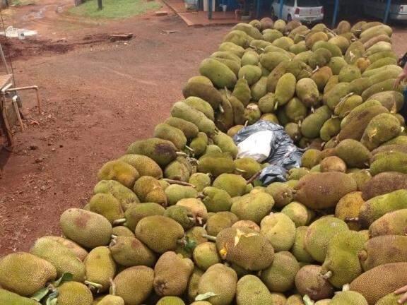 Tablete de maconha em meio a frutas levadas em caminhão. (Foto: Porã News)