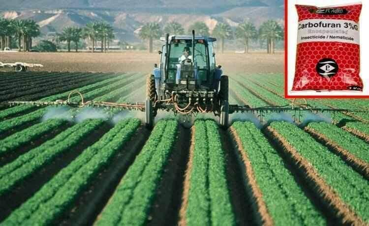 O carbofurano (detalhe) é usado para tratar sementes ou diretamente no solo (foto: Pixabay e Internet/Reprodução)