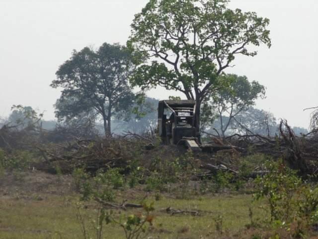 Fazendeiro foi multado e equipamentos usados no desmatamento apreendidos (Foto: Reprodução)
