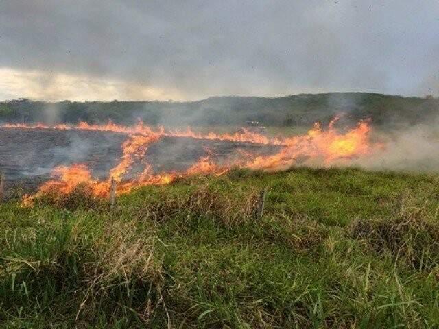 Vegetação pegando fogo em MS (Foto: divulgação)