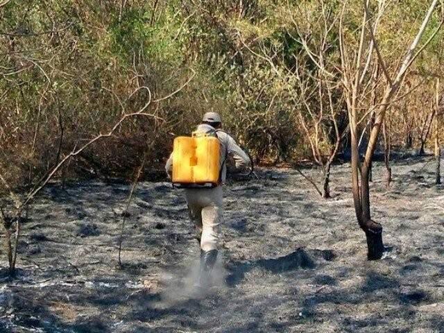 Brigadista trabalhando para conter queimada em anos passados: número de colaboradores dobrou em 2018 (Foto: Anderson Gallo/Diário Corumbaense)