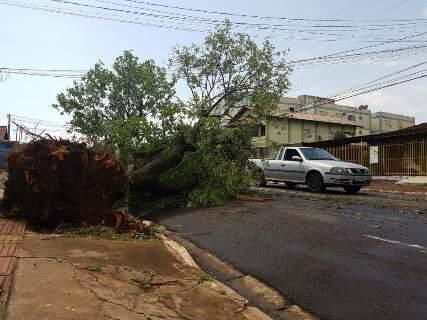 Meia hora de chuva com 74 km de vento derruba 30 árvores na Capital