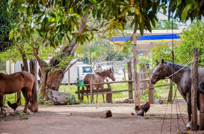 Na avenida Três Barras há 32 anos, propriedade rural chama atenção de curiosos e crianças sempre visitam o local. (Foto: Vanessa Tamires)