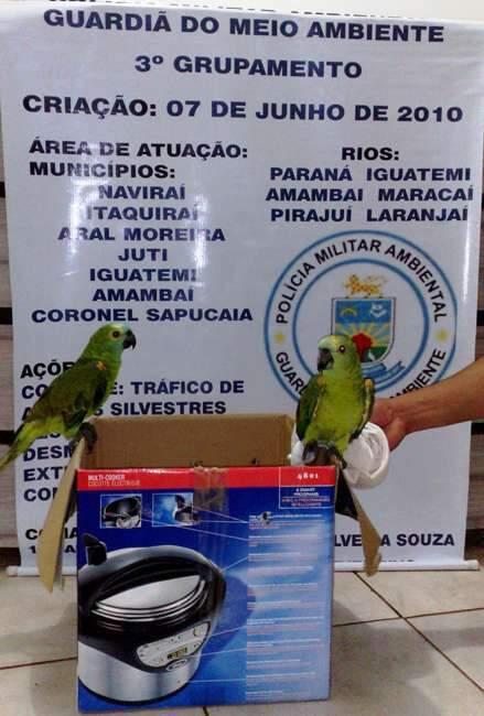 Papagaios serão encaminhados ao Cras