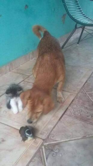 Com os outros bichos da casa, o cão e o gato.