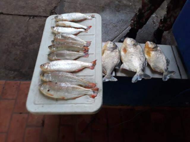 Pescados apreendidos com medida abaixo da permitida por lei (Foto PMA/Divulgação)