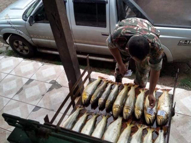 Apreensão de peixes pela PMA; fiscalização será intensificada. (Foto: PMA/Divuglação)