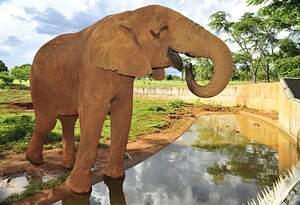Elefante no zoológico de Brasília. Foto: Divulgação