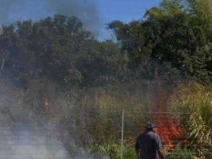 Fogos durante jogo da seleção causam incêndio e morte de animais