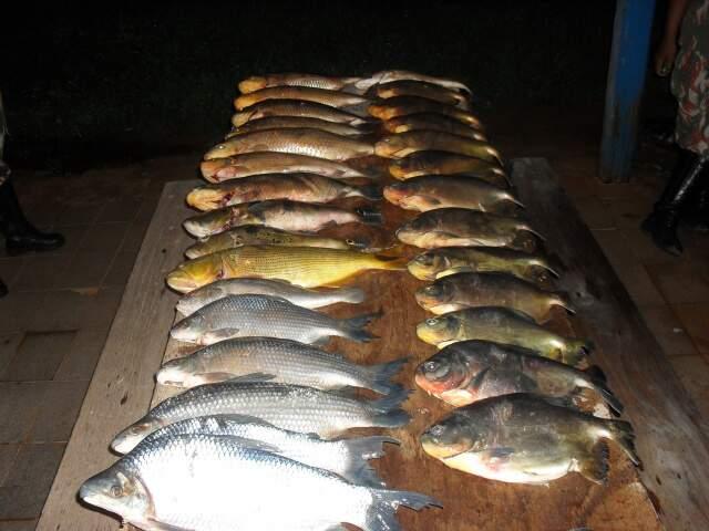 Peixes tinham tamanhos inferiores ao permitido pela legislação. (Foto: Divulgação)