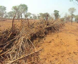 Área desmatada tem 8 hectares. (Foto: Divulgação/PMA)