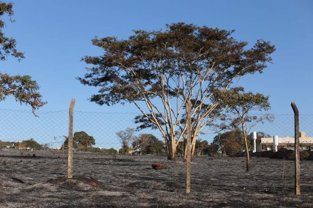 Área ficou destruída após incêndio no Chácara Cachoeira. (Foto: Fernando Antunes)