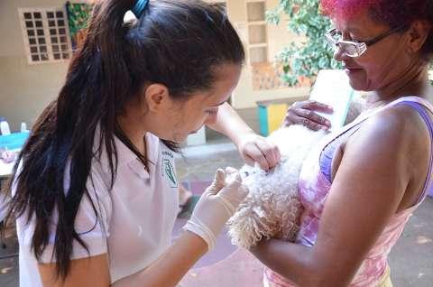 Em dois dias de campanha contra raiva, mais de 4 mil cães são imunizados