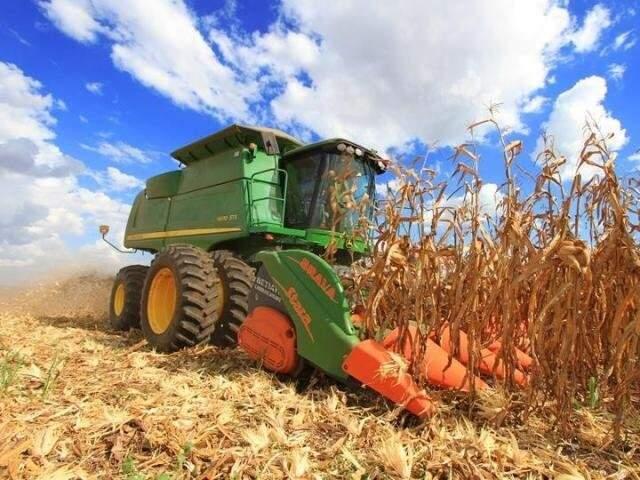 O Brasil é atualmente o terceiro maior produtor de milho do mundo. (Foto: Divulgação/Governo Federal)