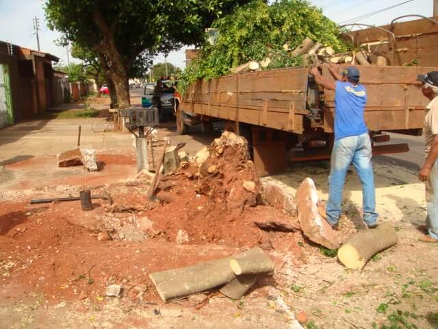 O homem disse que a prefeitura permitiu a substituição da árvore porque estava rachando a calçada. (Foto: Divulgação)